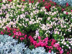 Растения на вашей площадке